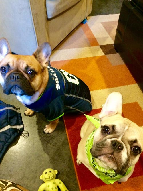 Bow Wow Blue Friday Photos, Sniff Seattle Dog Walkers, Seattle Seahawks