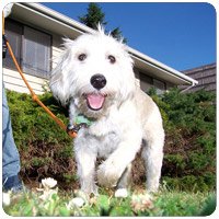 Bellevue-Seattle Dog Walking Rates
