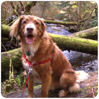 Bellevue-Seattle Rates For Park Hikes With Dogs