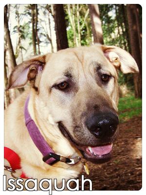 Dog Walker Bellevue