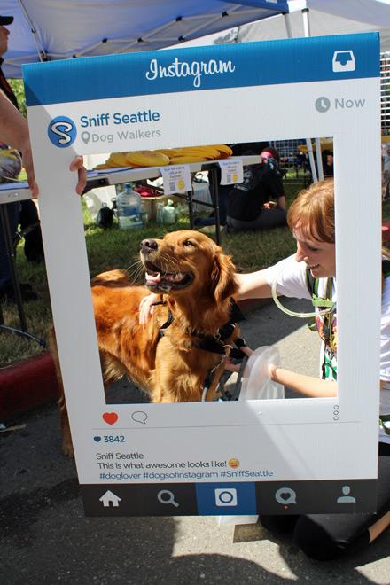 Furry 5K 2016 Sniff Seattle Instagrams Pics