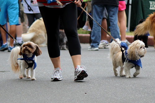 Furry 5K Seattle, Happy Dogs, Sniff Seattle