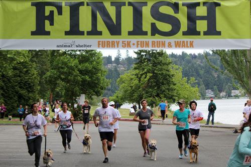 Furry 5K Photos, Dog Photos, Sniff Seattle Bellevue Dog Walkers