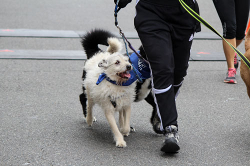 Furry 5K Photos, Sniff Seattle Tent, Sniff Seattle Bellevue Dog Walkers