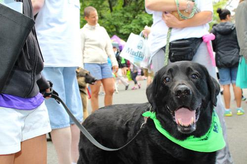 Furry 5K Photos, Dog Photos, Sniff Seattle Bellevue Dog Walkers