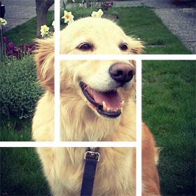 Kirkland Dog Walking