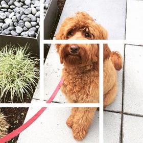 Belltown Dog Walking