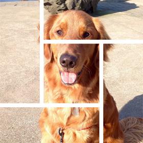 Redmond Dog Walking