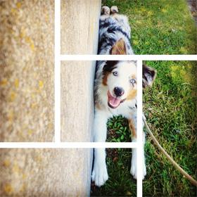 Redmond's #1 Dog Walker