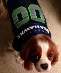 Sniff Seattle's Bow Wow Blue Friday, Free Dog Walks, Dog In Seahawks Jersey