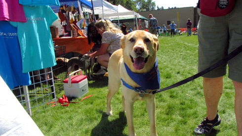 ShoreDog, Summer DogFest, Sniff Seattle Dog Walkers