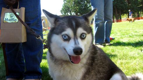 ShoreDog, Summer DogFest, Sniff Seattle Bellevue Dog Walkers