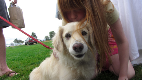 Pasado's Safe Haven, Bark At Marymoor Park, Sniff Seattle Dog Walkers