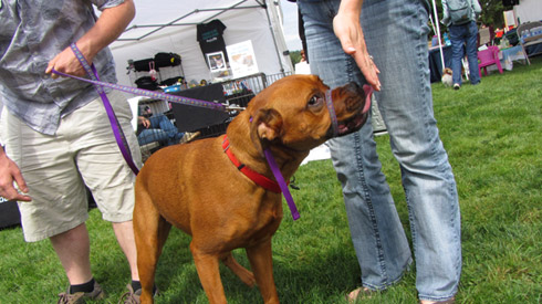 Pasado's Safe Haven, Bark At Marymoor Park, Sniff Seattle Bothell Dog Walkers
