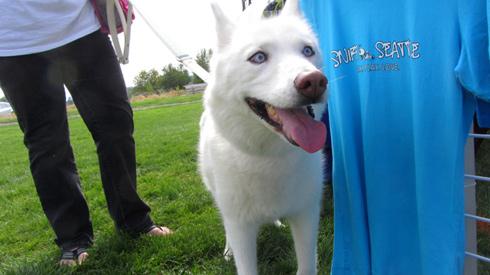Pasado's Safe Haven, Bark At Marymoor Park, Sniff Seattle Mercer Island Dog Walkers
