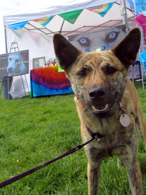 Pasado's Safe Haven, Bark At Marymoor Park, Sniff Seattle Kirkland Dog Walkers