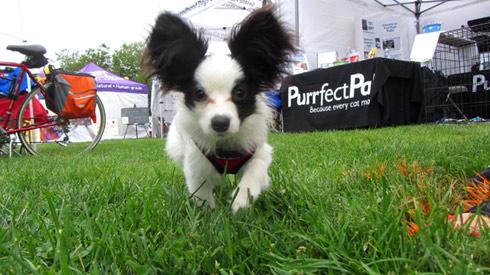 Pasado's Safe Haven, Bark At Marymoor Park, Sniff Seattle Redmond Dog Walkers
