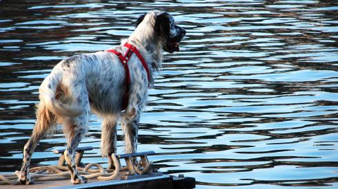 Sniff Seattle Bellevue Dog Walkers, A Dog's Ten Commandments, 10 Canine Commandments