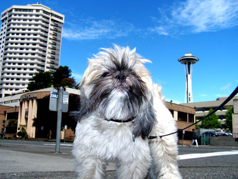 Dog Walking 98121, Sniff Seattle Dog Walkers, Space Needle