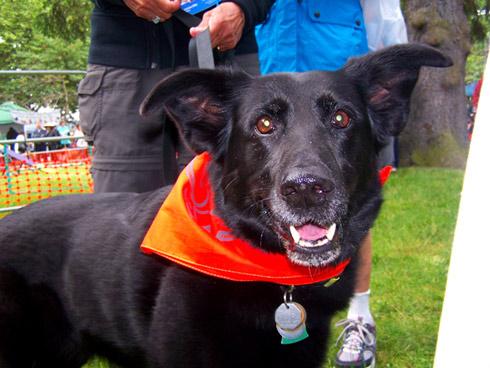 Furry 5K Photos, Dog Bandanas, Sniff Seattle Bellevue