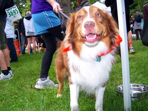 Furry 5K Photos, Bellevue Seattle Dogs, Sniff Seattle