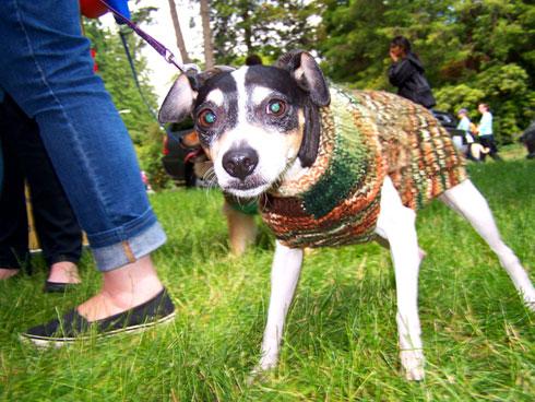 Furry 5K Seattle, Dog Photos, Sniff Seattle Bellevue Dog Walkers