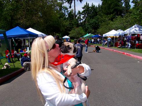 Furry 5K Seattle, Pugs, Sniff Seattle Bellevue Dog Walkers
