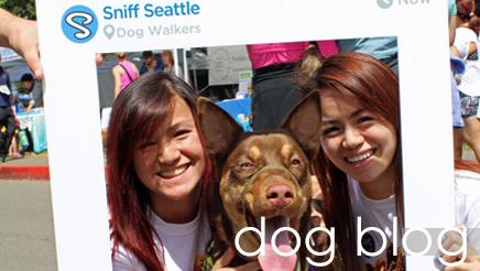 Sniff Seattle Dog Blog