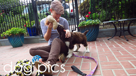 Dog Photos, Dog Pics