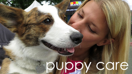 Find Seattle Puppy Care