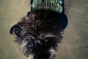 South Lake Union Dog Walker, Dogs In Seahawks Jerseys, Dog Walking 98109