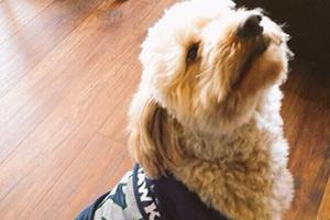 Bellevue Seattle Dogs, Dog Walker Eastlake, Dogs In Seahawks Jerseys