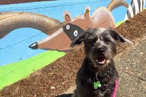 Fremont Seattle Dog Walking, Dog Walker 98103
