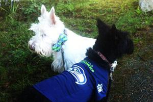 Dog Walking Fremont, Dogs In Seahawks Jerseys, Dog Walker 98103