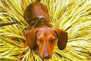 Dog Walking SLU, Sniff Seattle Bellevue Dog Walkers, Seattle Dogs