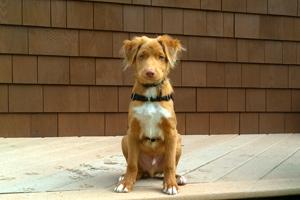 Dog Walker 98011 98012, Sniff Seattle Bellevue Dog Walkers, Bothell Dog Walking