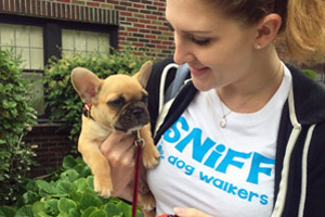 French Bulldog, Puppy, Sniff Seattle Puppy Out Relief