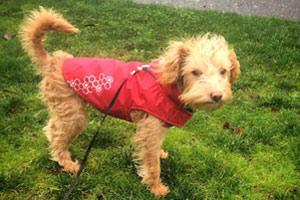 Dog Walking Magnolia, Sniff Seattle Bellevue Dog Walkers, 98199 Dogs