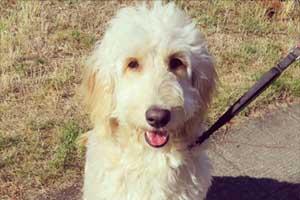 Dog Walker Queen Anne, Sniff Seattle Bellevue, 98109 Dogwalkers