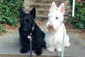 Fremont Pet Sitting, Sniff Seattle Bellevue Dog Walkers, 98103 Dogwalking