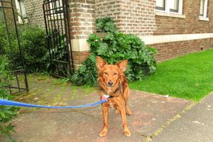 Alki Dogwalker, Sniff Seattle, 98116 Dog Walking