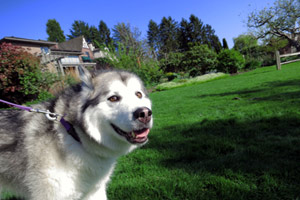 Dog Walking Laurelhurst, Sniff Seattle, Bellevue Seattle Dogs