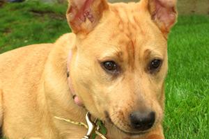 Redmond Dog Walker, Puppies, Sniff Seattle