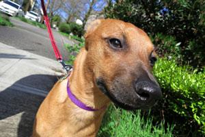 Dog Walker Tangletown, Bellevue Seattle Dogs, Dog Photos