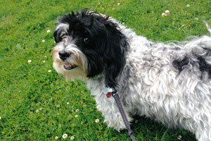 Dog Walking Windermere, Dog Walker 98105, Sniff Seattle Bellevue