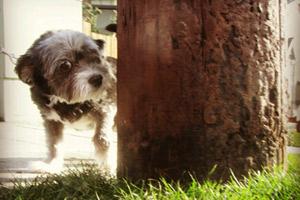 Sniff Seattle, Bellevue Seattle Dogs, Queen Anne Dog Walking