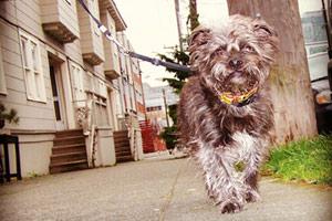 Dog Walking South Lake Union, Bellevue Seattle Dogs, Sniff Seattle