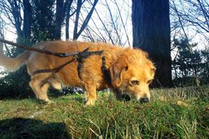 Dog Walker Mercer Island, Bellevue Seattle Dogs, Mercer Island Dog Care