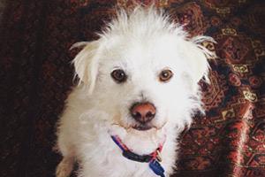 Einstein, Ballard Dog Walker, Dog Walking Phinney Ridge