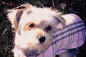 Dog Walking Capitol Hill, Cute Dogs, Dog Walker 98112